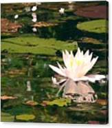 Wild Water Lilly Canvas Print