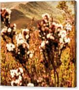Wild West Mountain View Canvas Print