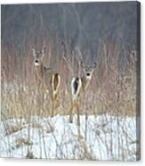 Wild Winter Canvas Print