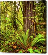 Wild Wonder In The Woods Canvas Print