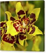 Wildcat Doris Orchid Canvas Print