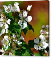Wildflower 4 Canvas Print