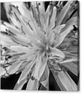 Wildflower 5 Black N White Canvas Print