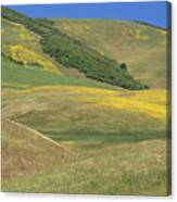 Wildflower Display - Salisbury Potrero Canvas Print