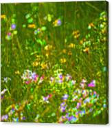 Wildflower Field Canvas Print
