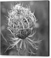 Wildflower I Canvas Print