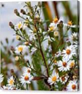 Wildflower,  Canvas Print