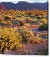 Wildflower Meadow At Joshua Tree National Park Canvas Print