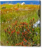 Wildflower Meadow With Indian Paintbrush Canvas Print
