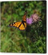 Wildflower Monarch Canvas Print
