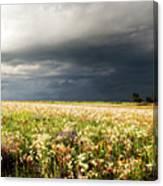 Wildflower Panorama 2008 Canvas Print