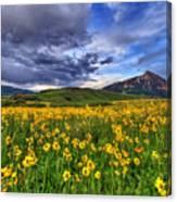 Wildflower Storm Canvas Print