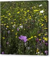 Wildflower Surprise Canvas Print