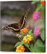 Wildflower Swallowtail Canvas Print