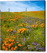 Wildflower Wonders Of The High Desert Canvas Print