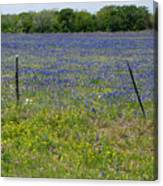 Wildflowers - Blue Horizon Canvas Print