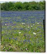 Wildflowers - Blue Horizon Too Canvas Print