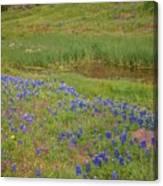 Wildflowers Along The Creek Canvas Print