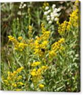 Wildflowers And Bee Canvas Print