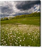 Wildflowers And Storm Clouds Canvas Print