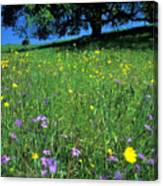 Wildflowers And The Oak Canvas Print