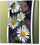 Wildflowers And Visitor Canvas Print