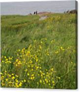 Wildflowers At Cape Spear Canvas Print