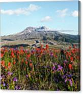 Wildflowers At Mount St Helens Canvas Print
