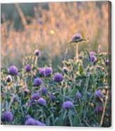 Wildflowers At Sunrise Canvas Print