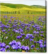 Wildflowers Carrizo Plain Canvas Print