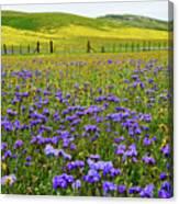 Wildflowers Carrizo Plain National Monument Canvas Print