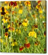 Wildflowers Four Canvas Print