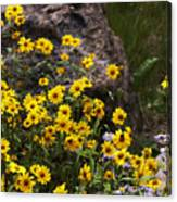 Wildflowers Honoring Mary Jabens Canvas Print