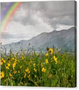 Wildflowers In Crested Butte Canvas Print