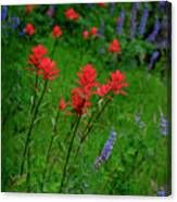 Wildflowers In Mountains Wilderness Canvas Print