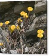 Wildflowers In Rocks Canvas Print