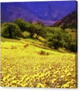 Wildflowers In The San Emigdio Mountains Canvas Print