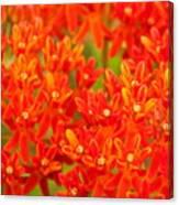 Wildflowers In The Smokies Canvas Print