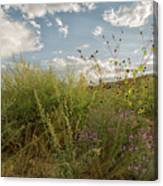 Wildflowers Of Chaco Canvas Print