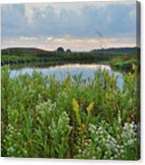 Wildflowers Of Hackmatack National Wildlife Refuge Canvas Print