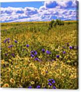 Wildflowers Of The Carrizo Plain Superbloom 2017 Canvas Print