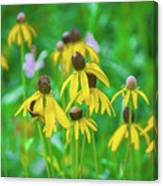 Wildflowers Of Yellow Canvas Print