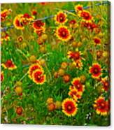 Wildflowers On The Barb Canvas Print