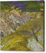 Wildflowers Up The Hills Of Temblor Range At Carrizo Plain National Monument Canvas Print