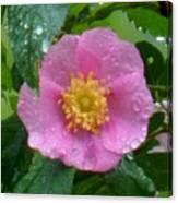 Wild's Pink Rose Canvas Print
