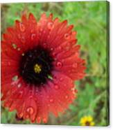 Wildflower Water Drops Canvas Print