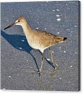Willet And Shadow Canvas Print