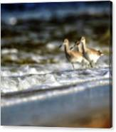 Willets In The Waves Canvas Print