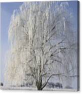 Willow In Ice Canvas Print