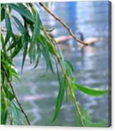 Willow Over The Water Canvas Print